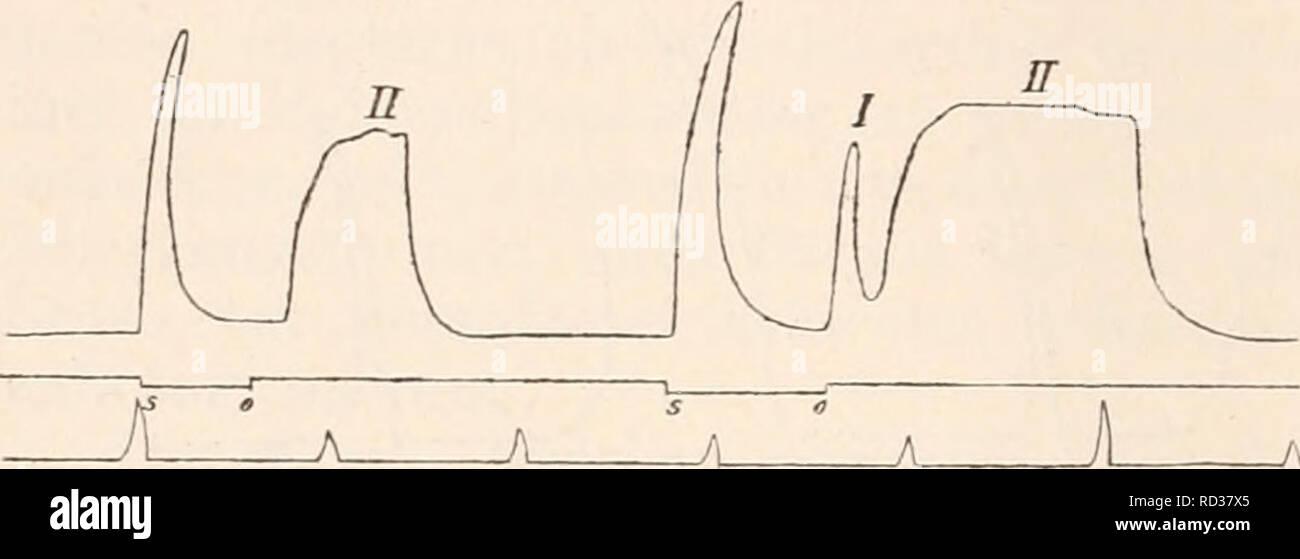 . Elektrophysiologie. . 586 ^i^ elektrische Erregun,^ der Nerven. Zeit, wo nach Application von NaCl auf die dem Muskel näher ge- legene Elektrode ein absteigend gerichteter schwacher Strom bereits kräftigen Schliessungstetanus auslöst, beobachtet man in der Regel bei Schliessung desselben Stromes in umgekehrter Richtung nur eine einfache Zuckung, deren Verlauf und Grösse sich nicht von jenen Schliessungszuckungen unterscheidet, welche unter denselben Versuchs- bedingungen vor der localen NaCl-Behandlung ausgelöst wurden. Es dürfte dieser Umstand insoferne nicht ohne Interesse sein, als er zu  Stock Photo