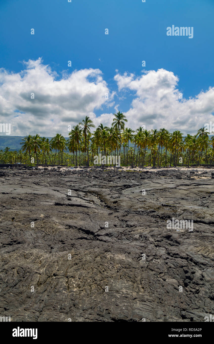 Palm grove and lava field behind Puuhonua O Hōnaunau/Place of Refuge National Historical Park Hawaii - Stock Image