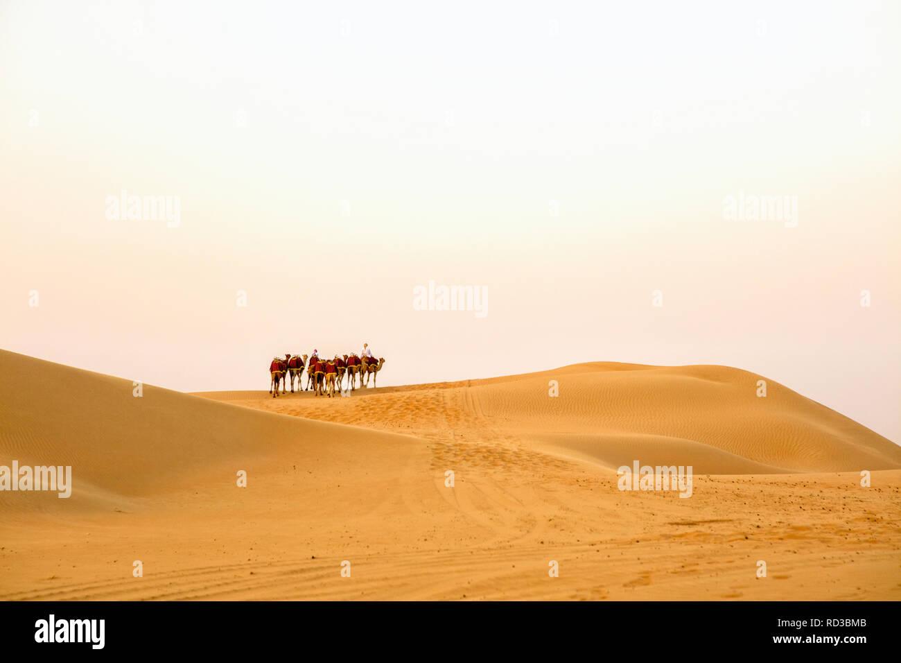 A camel caravan in the Rub' al Khali desert. - Stock Image