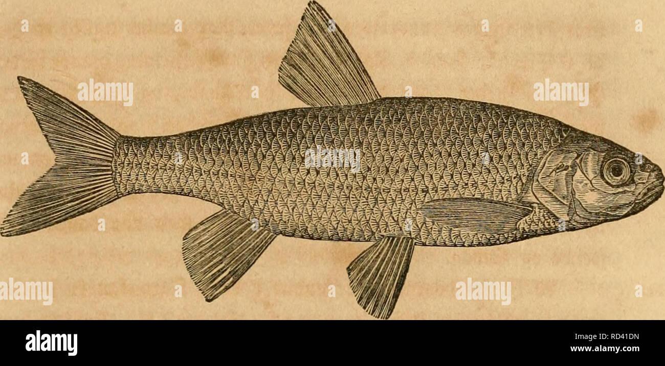 masser o fisk dating alle forskellige dating sites