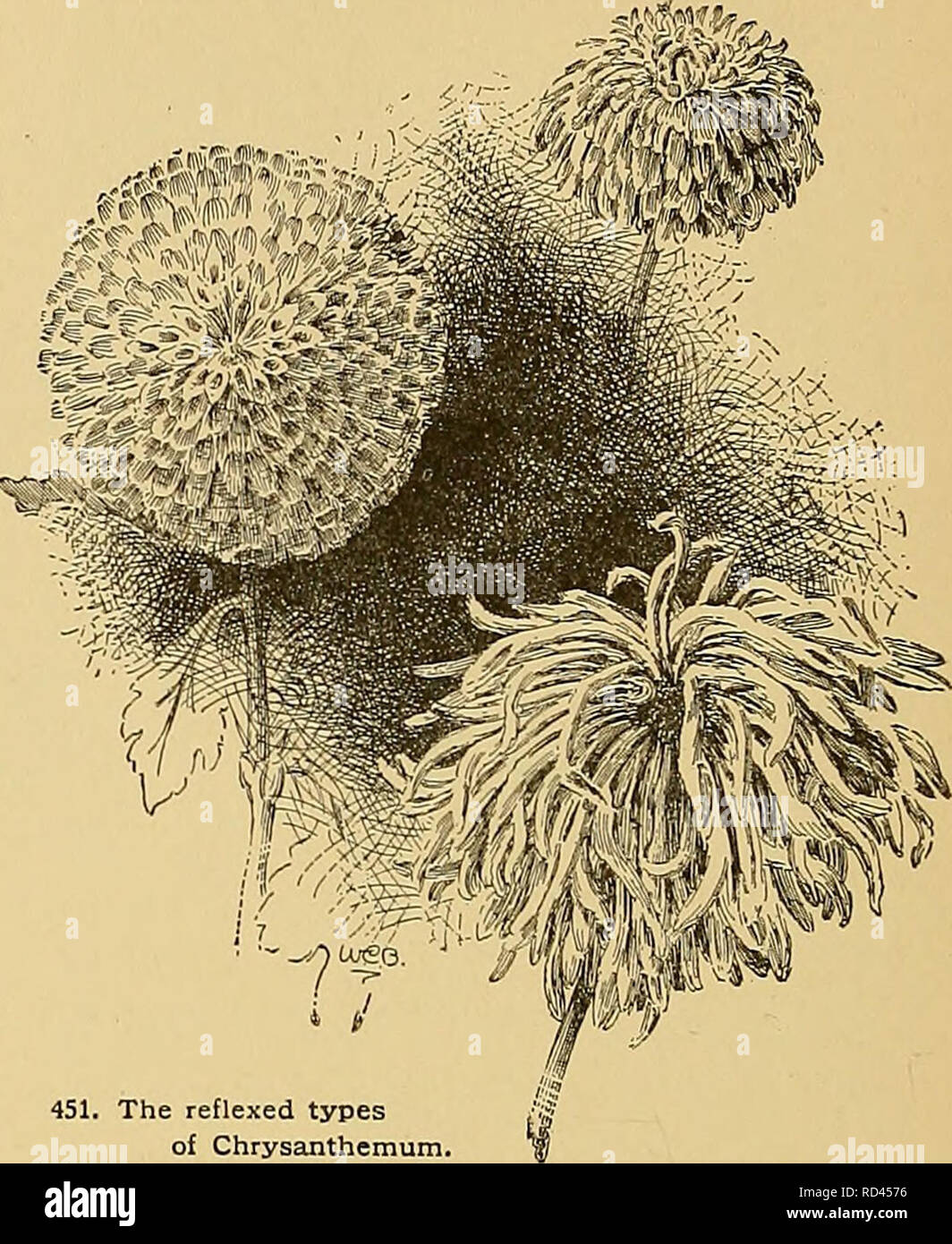 Cyclopedia of American horticulture, comprising suggestions