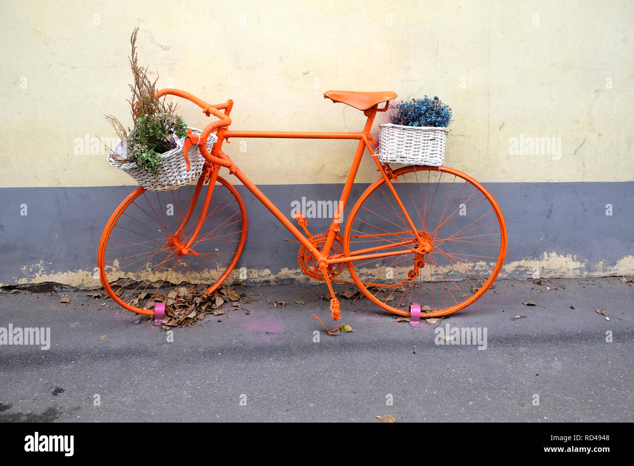 Retro style sport bicycle color orange with flower baskets as decoration outdoor near the wall front view - Stock Image
