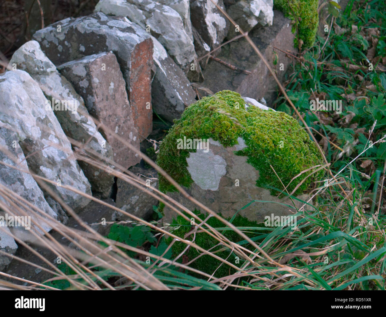 Old milestone covered in moss, Orkney isles - Stock Image