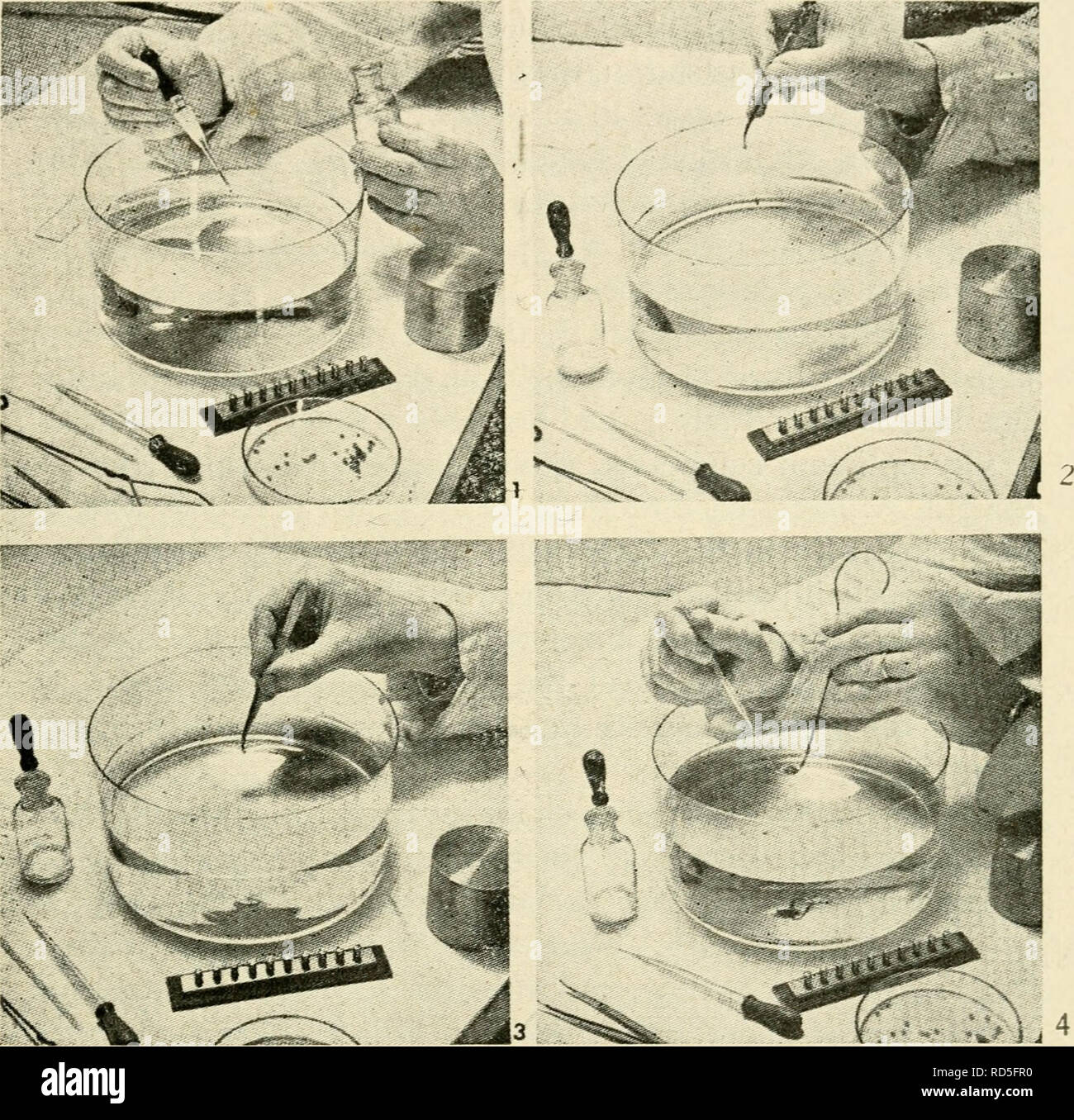 The electron microscope, its development, present