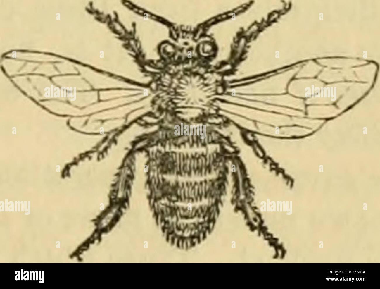 Cuvier S Animal Kingdom Arranged According To Its