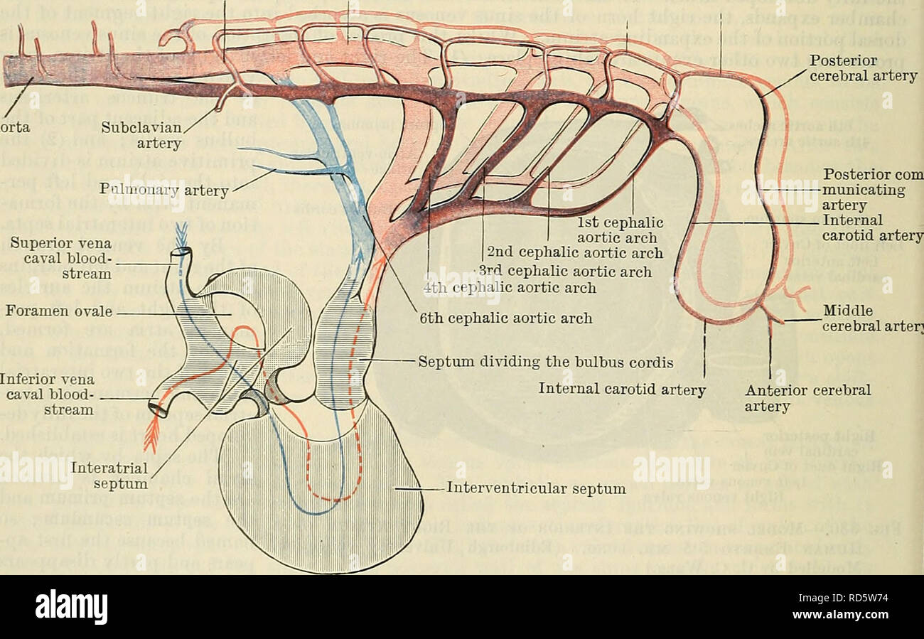 Cunninghams Text Book Of Anatomy Anatomy Wall Of Right Atrium