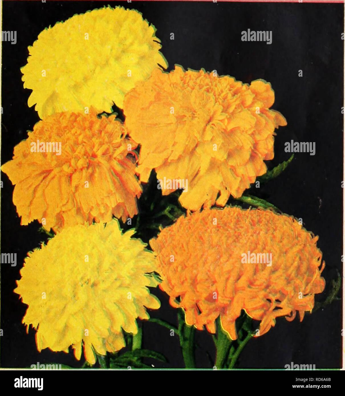 Currie S Garden Annual Flowers Seeds Catalogs Bulbs Plants
