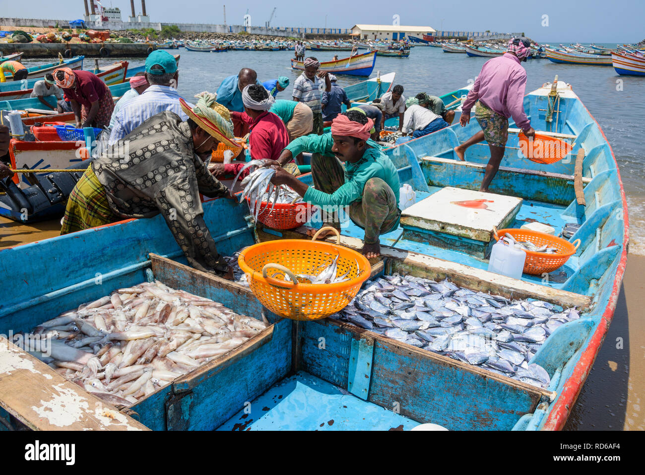 Vizhinjam beach fish market, near Kovalam, Kerala, India - Stock Image