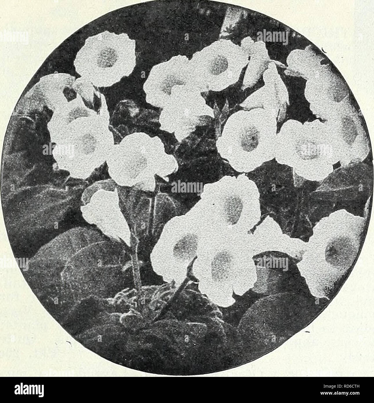 . Currie's garden annual : spring 1934 59th year. Flowers Seeds Catalogs; Bulbs (Plants) Seeds Catalogs; Vegetables Seeds Catalogs; Nurseries (Horticulture) Catalogs; Plants, Ornamental Catalogs; Gardening Equipment and supplies Catalogs. CURRIE BROTHERS CO., MILWAUKEE, WIS Page 25. GLOXINIA Handsome, free flowering, tender perennials for pot culture, succeed- ing best in partially shaded places. Extra Choice Mixed Pkt. 20c GOURDS (Ornamental) Rapid growing annual climbers bearing orna- mental fruits. They are useful for covering fences, trellis, unsightly fences, etc. Apple-shaped. Beautifull - Stock Image