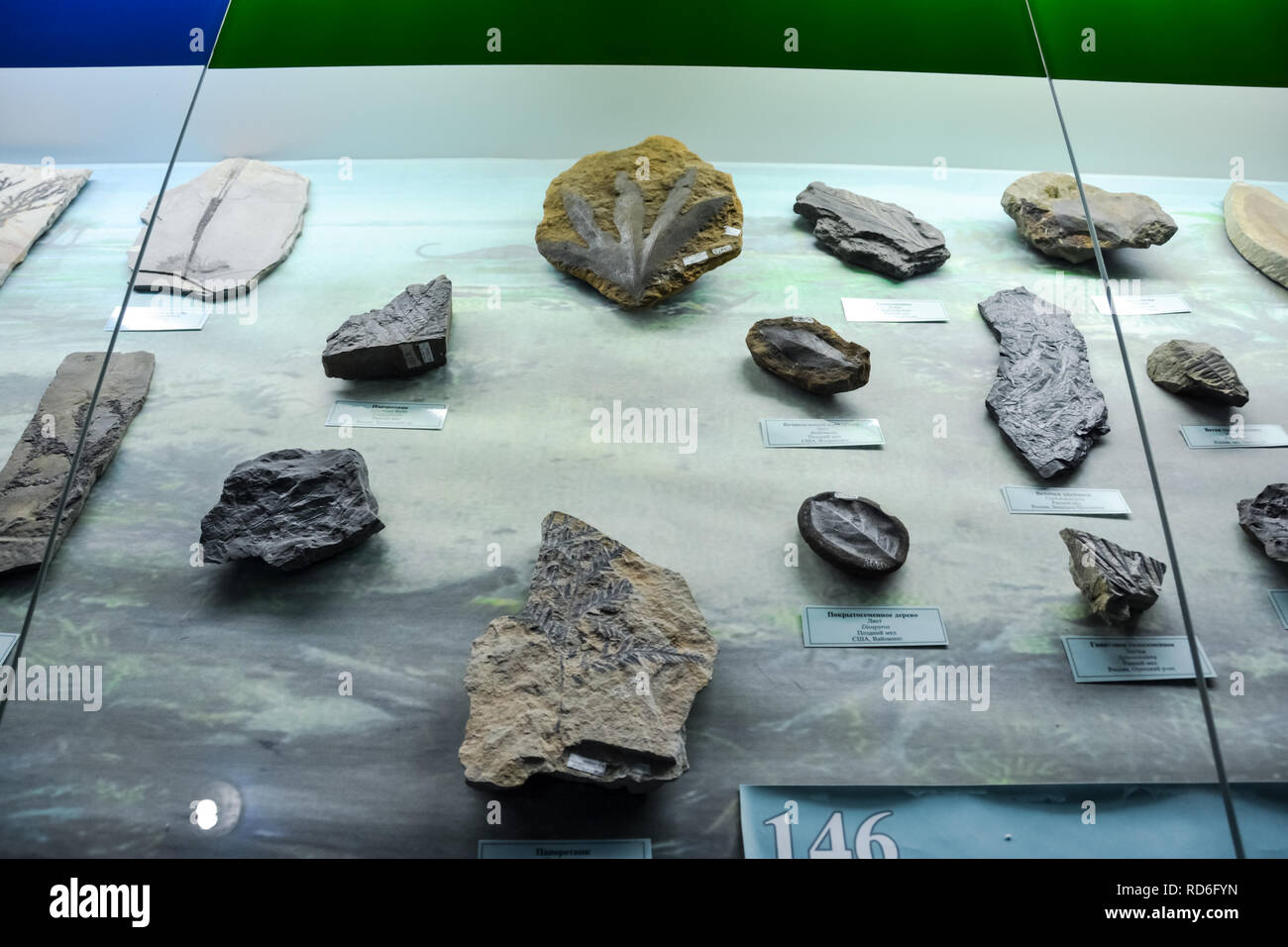 Geological Museum named after Vernadsky, Moscow, Russia - June 11, 2018: Exhibits of the Museum named after Vernadsky in Moscow, Fossil remains of anc - Stock Image