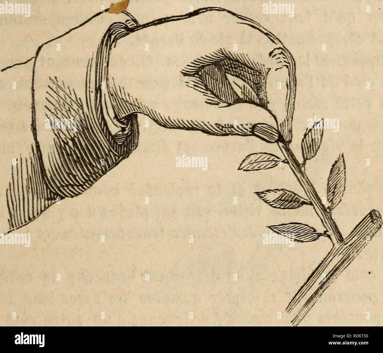 Quel Fruit Planter Au Printemps culture des arbres fruitiers aÌ tout vent. fruit-culture