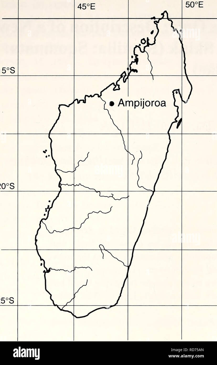 . Current herpetology. Reptiles; Herpetology. 10 Current Herpetol. 22(1) 2003 15°S. 20°S 25°S Fig. 1. Map of Madagascar, showing location of Ampijoroa, the type locality of Sirenoscincus yamagishii sp. nov. We defined the scales covering the eyes as ocular(s). Terminology for the other charac- ters follows Sakata and Hikida (2003). Sirenoscincus yamagishii gen. et sp. nov. Figs. 2 and 3 Holotype KUZ R50922, mature female; Ampijoroa, Ankarafantsika Strict Nature Reserve, north- western Madagascar (16 20'S, 46 48'E: Fig. 1), 100 m; collected by A. Mori, M. Hasegawa, and I. Ikeuchi, 7 November 19 - Stock Image