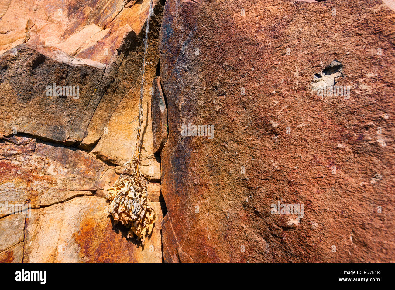 A close up of a natural rock wall and a dried plant. - Stock Image