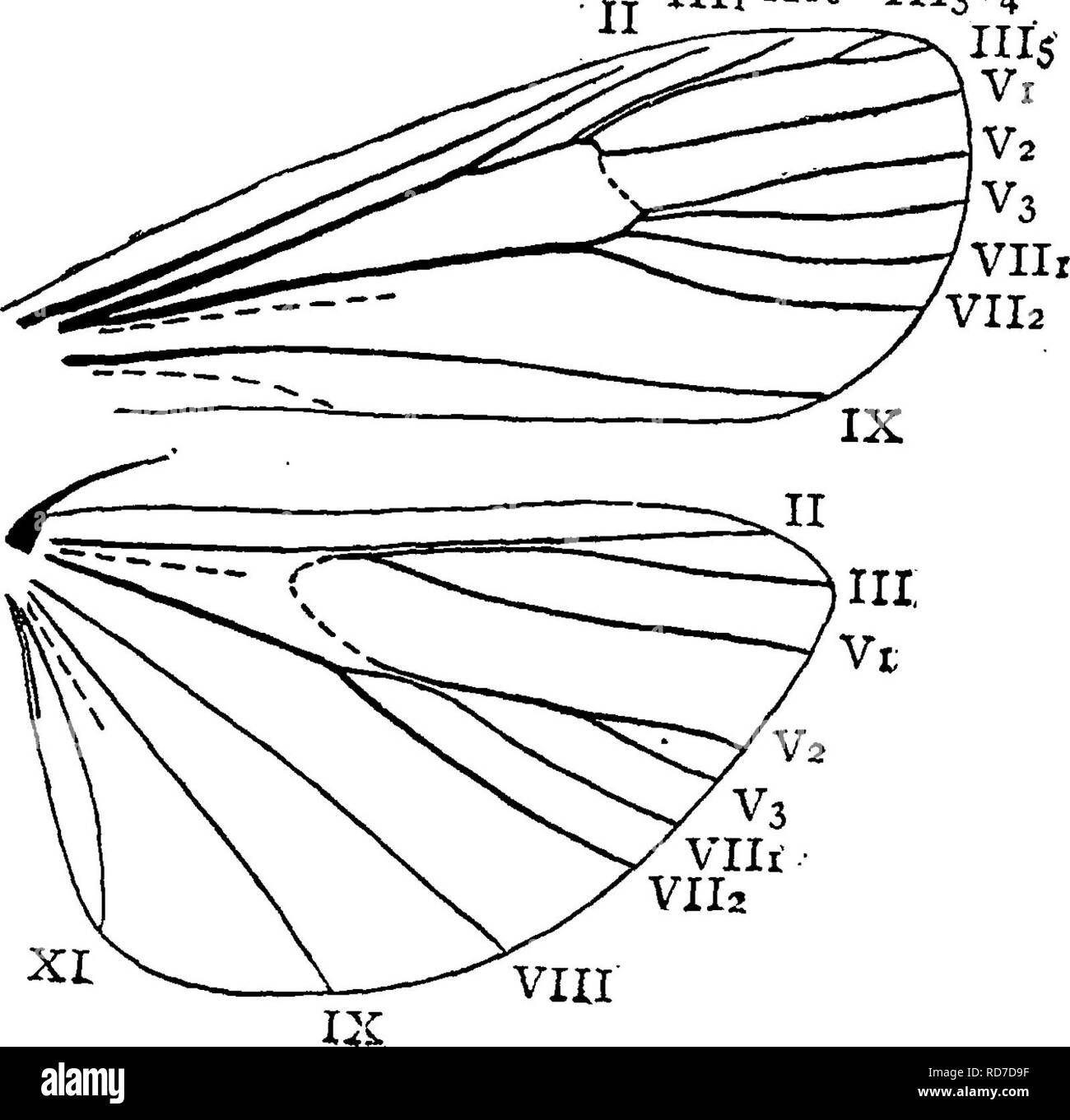 A manual for the study of insects  Insects  LEPIDOPTERA, 235