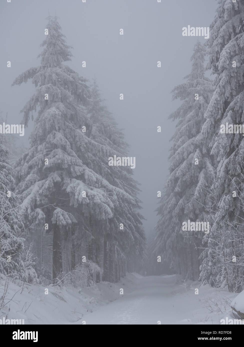Winterimpressionen in the Wood - Stock Image