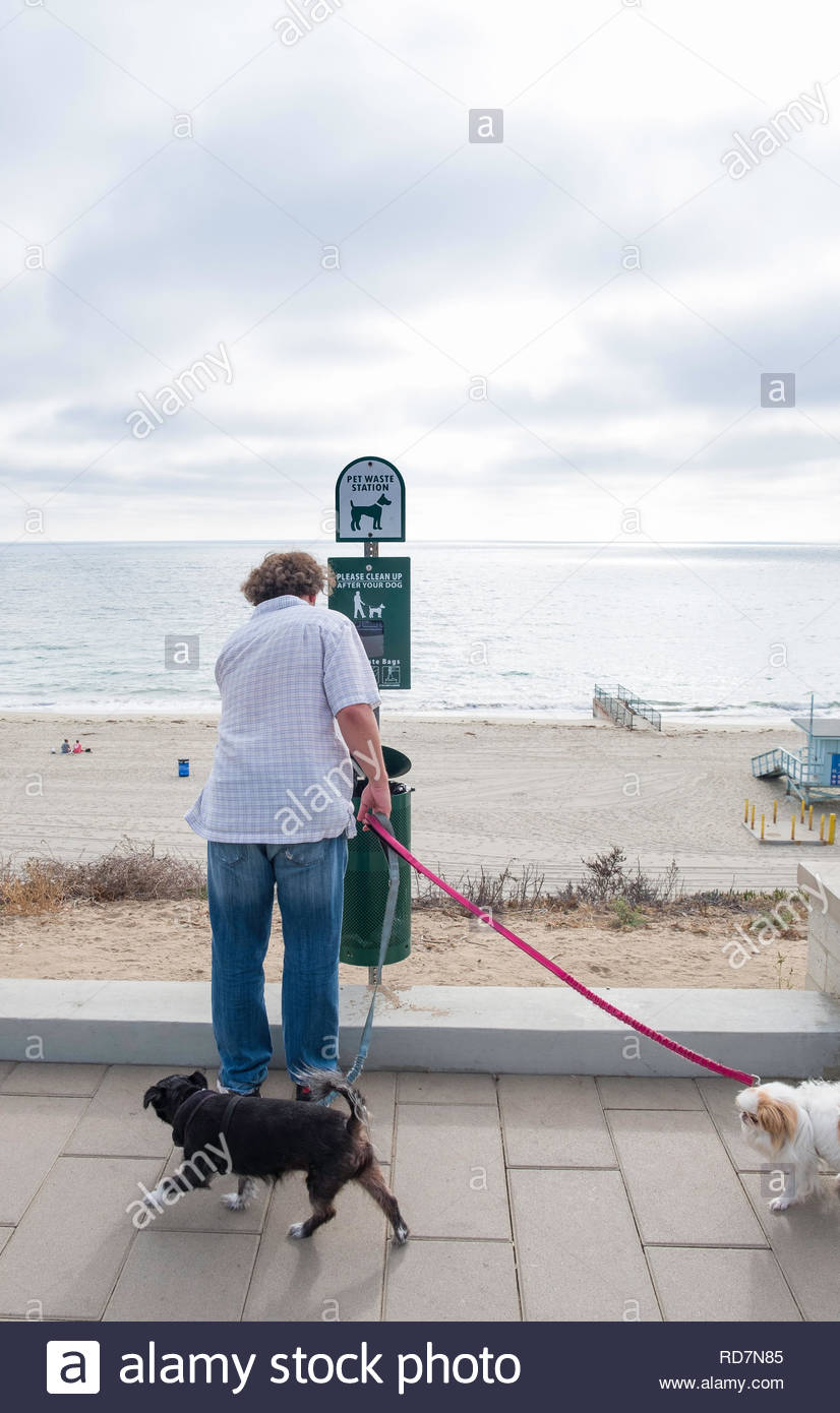 Man with two dogs throwing away dog waste into marked receptacle, Torrance County Beach, Redondo Beach, Los Angeles County, California, USA - Stock Image