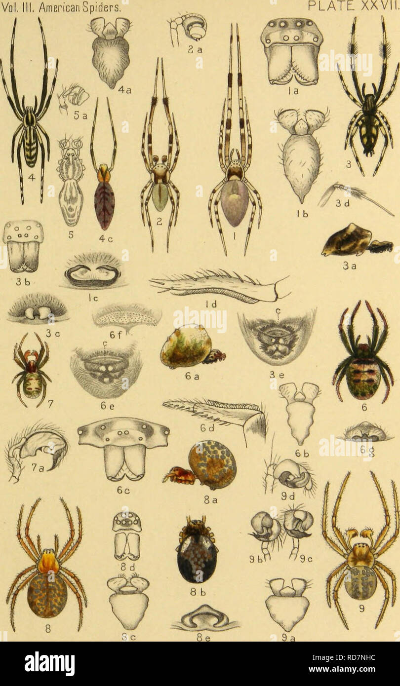 . American spiders and their spinning work. A natural history of the orbweaving spiders of the United States, with special regard to their industry and habits. Spiders. Vol. III. American Spiders. ,2, Uloborus geniculates. 3,5, U.Amen'canus. 6.7, Hyptiotes cavafus. 8,9, Then'diosoma radiosum.. Please note that these images are extracted from scanned page images that may have been digitally enhanced for readability - coloration and appearance of these illustrations may not perfectly resemble the original work.. McCook, Henry C. (Henry Christopher), 1837-1911. [Philadelphia] The Author, Academy  - Stock Image