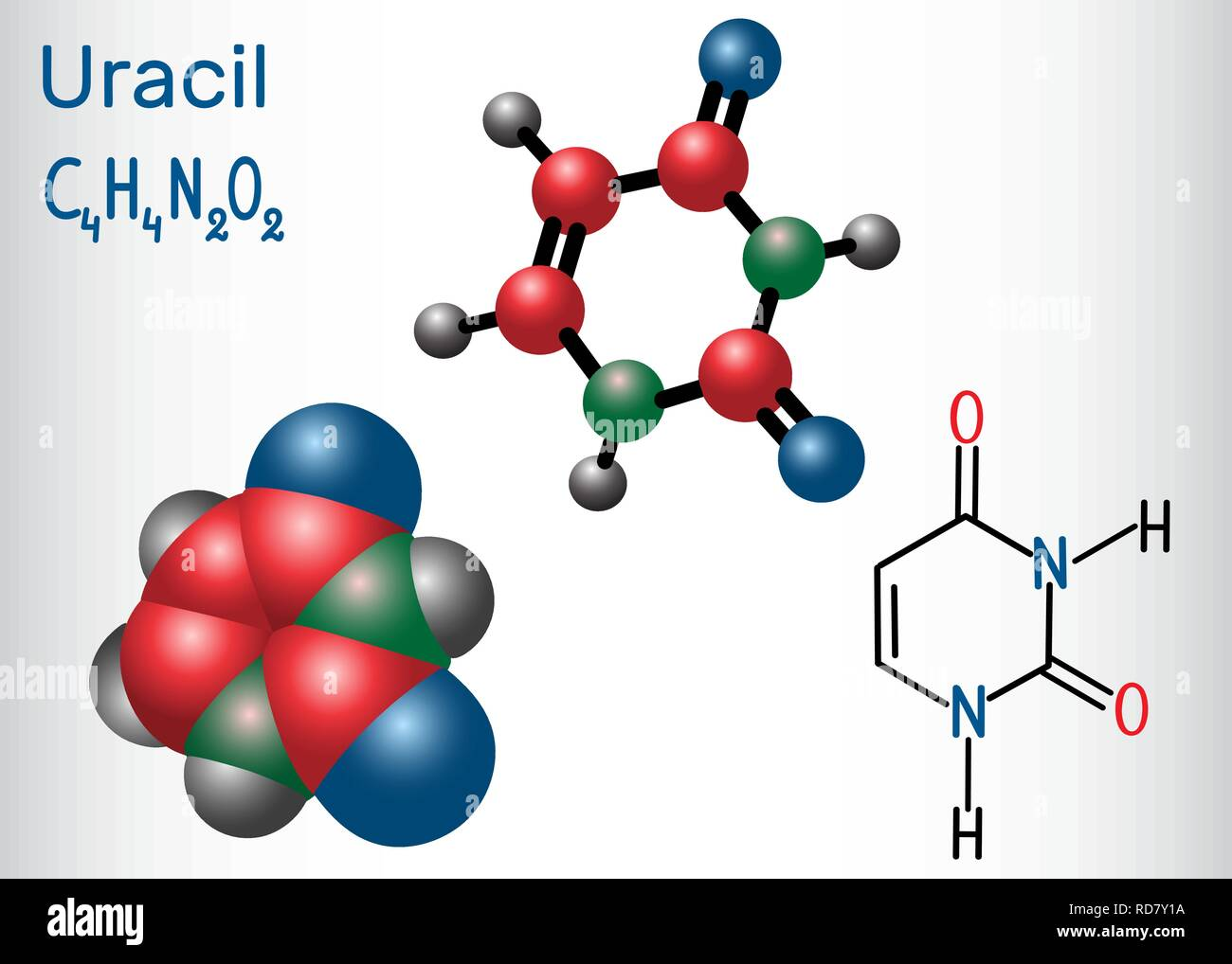 Uracil  (U) - pyrimidine  nucleobase in the nucleic acid of RNA. Structural chemical formula and molecule model. Vector illustration - Stock Image
