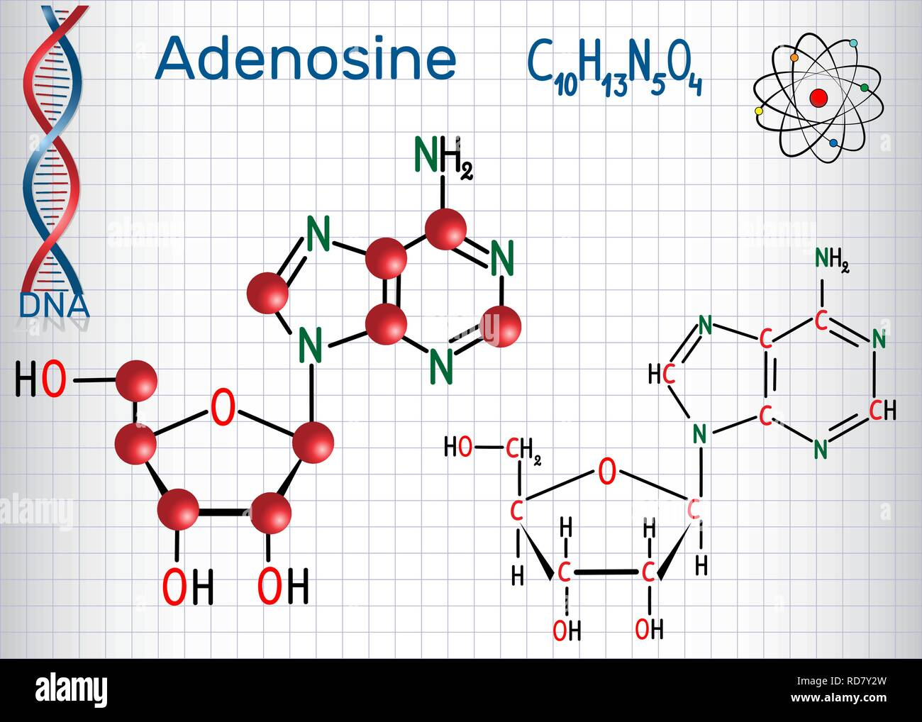 Adenosine - purine nucleoside molecule, is important part of ATP, ADP, cAMP , RNA, DNA. Sheet of paper in a cage. Structural chemical formula and mole - Stock Image