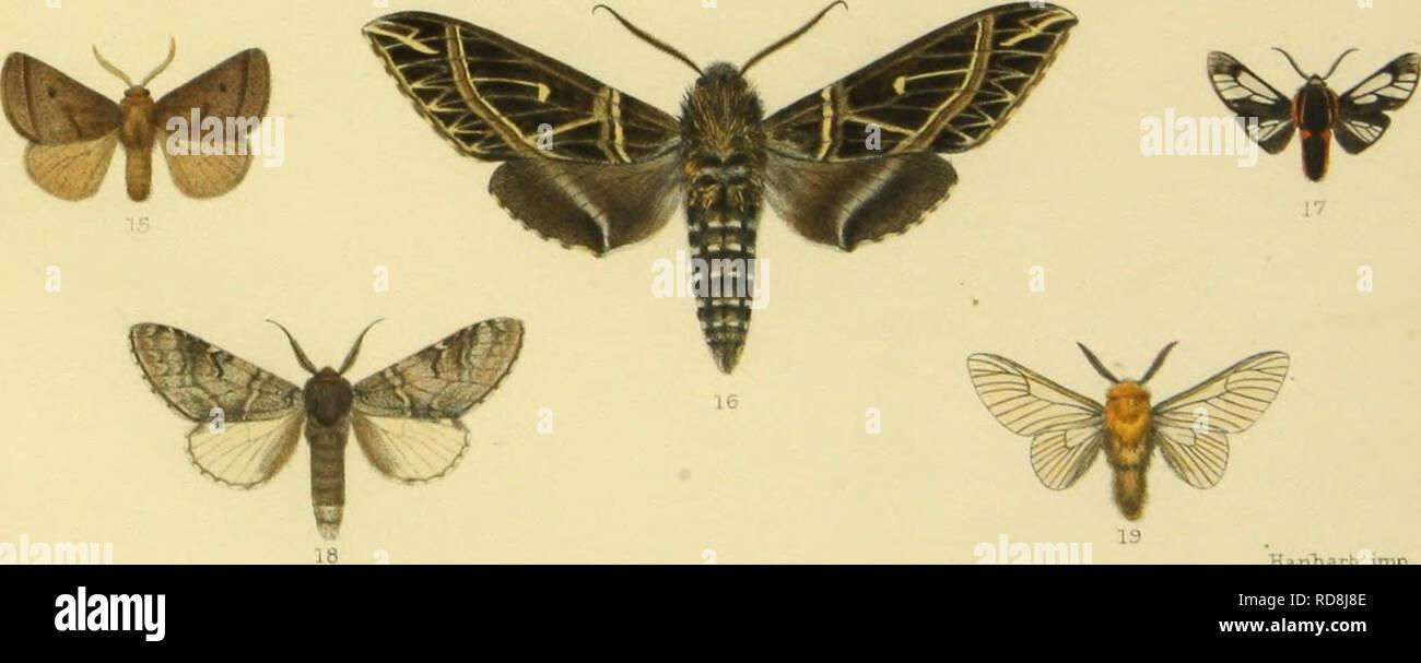 . Note sur la faune des le?pidopte?res de Loja (e?quateur), descriptions d'espe?ces nouvelles. Lepidoptera. ^ ym ^ ^. Hitiharb imp 1,2 Ecpa.ntKeria helDona.. ' 8 Nemce disjuncta 14 Euclea. ya-mouna.. 3 Phraqraatol3ia lymphasea. 9 Exidule cmctata . 15 Hiresapucara . 4 Odozana fifi . 10 Lobeza favilla . 16 E-uryglo^is davidiatiois 5 ,, anitras H MarsypoplioTa dissimilipeTmis.17 Lafajana cupra . 6 CrambomorpKa auraria . 12 Welo Tiu-ml^alensis 18 LiriTiniris mec-Kanica . 7 LitKosia pusa. 13 Polypaetes jipiro . 19 Pnsmoplera brossula. Please note that these images are extracted from scanned page im - Stock Image