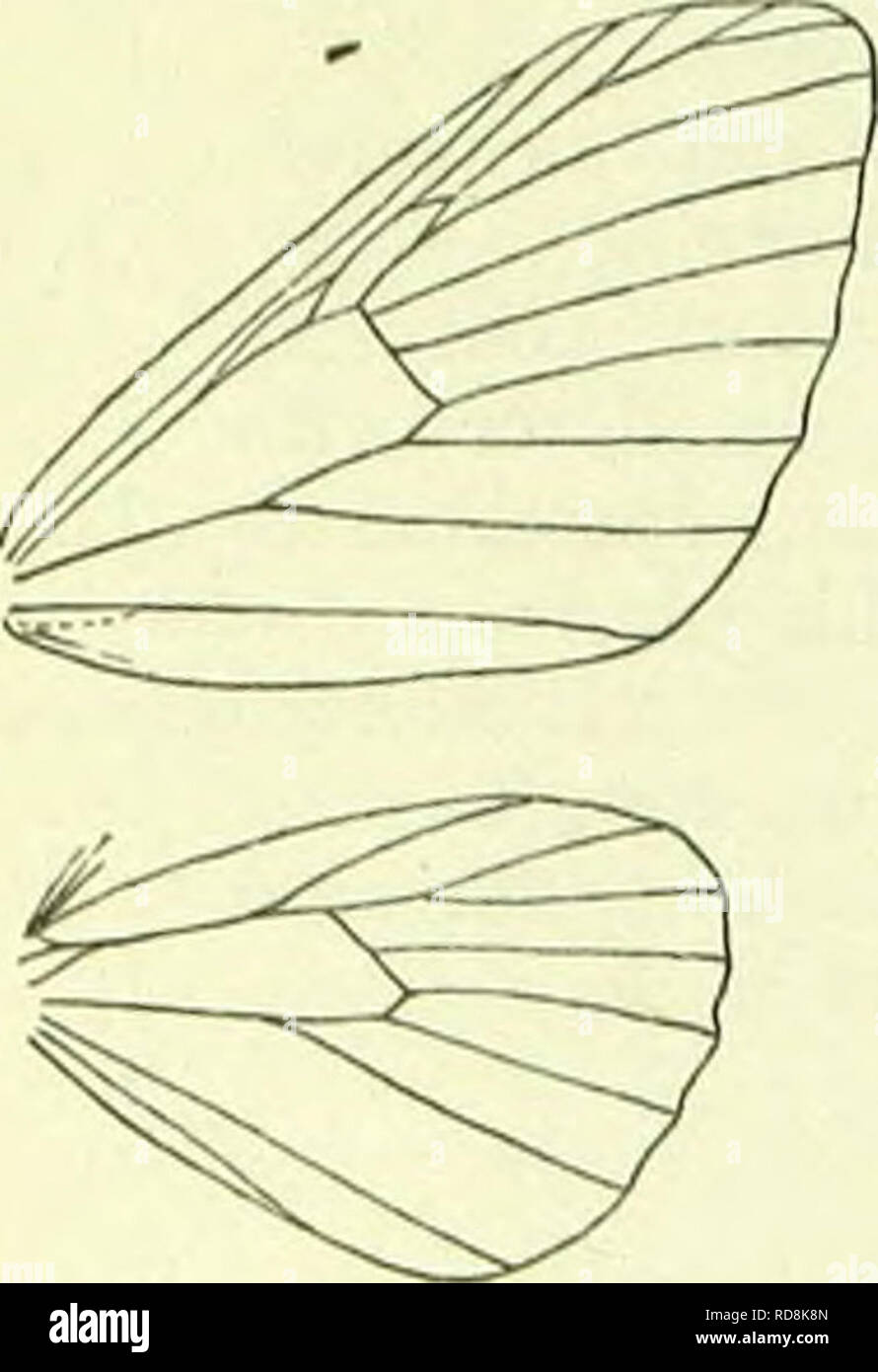 . A handbook of British lepidoptera. Lepidoptera. 15, Cataclysms, lib. Face with somewhat projecting scales. Antennae in 3 cili- ated. Palpi rough-scaled. Forewings: areole double, but posterior wall absent between 7 and 8. Hindwings : 8 anastomos- ing with cell to beyond middle. A small genus, attached to the European region. 1. C. virgata, liott. {lineolata, Hb.) 19-22 mm. Forewings fus- cous, densely whitish -sprinkled, Fonwtagof (***»»»***. with nearly straight darker striae; median band limited by nearly straight slender oehreous-brown externally blackish- edged fasciae, preceded and seco - Stock Image