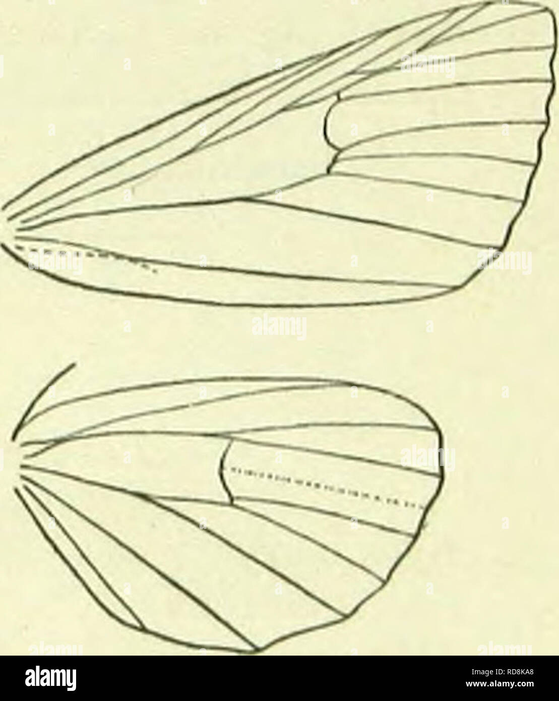 . A handbook of British lepidoptera. Lepidoptera. cai.limokpha] ARCTIADAE and S. Europe, W. Asia; 8. Larva purplish, tubercles ochreous, hairs light brown ; dorsal line broad, ochreous, darker-edged ; spiraoular white, irregular; head black: on Myosotis, Urtica, 1'lantayo, etc.; 9-5. 2. 6. dominula, L. 52-58 mm. Head and thorax blue-black, thorax with two dorsal orange marks. Forcwings dark indigo- green ; an orange dorsal spot near base, and two near costa before middle ; a spot in disc below middle, two or three larger posterior and some smaller subapieal spots ochrcous-whitish. Hindwings cr - Stock Image