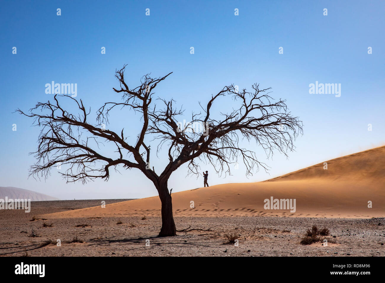 Person taking pictues on Dune 45 in Namib-Naukluft National Park, Namibia, Africa Stock Photo