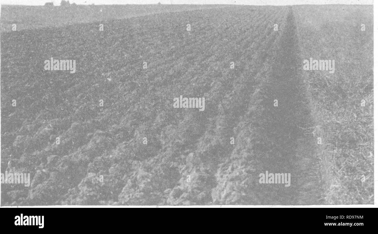 Productive soils