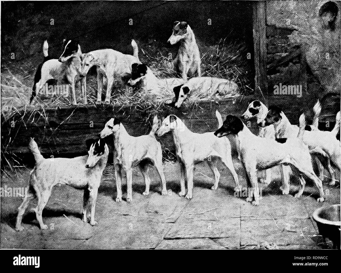 Brindle Colour Black and White Stock Photos & Images - Alamy