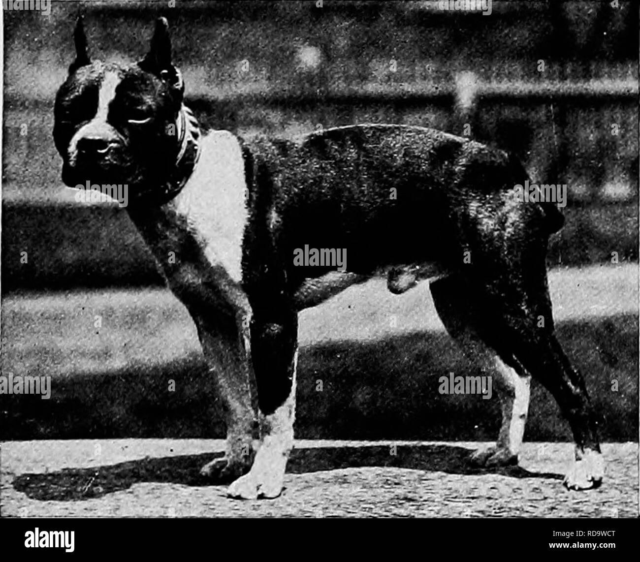 Dog With White Blaze Stock Photos & Dog With White Blaze Stock