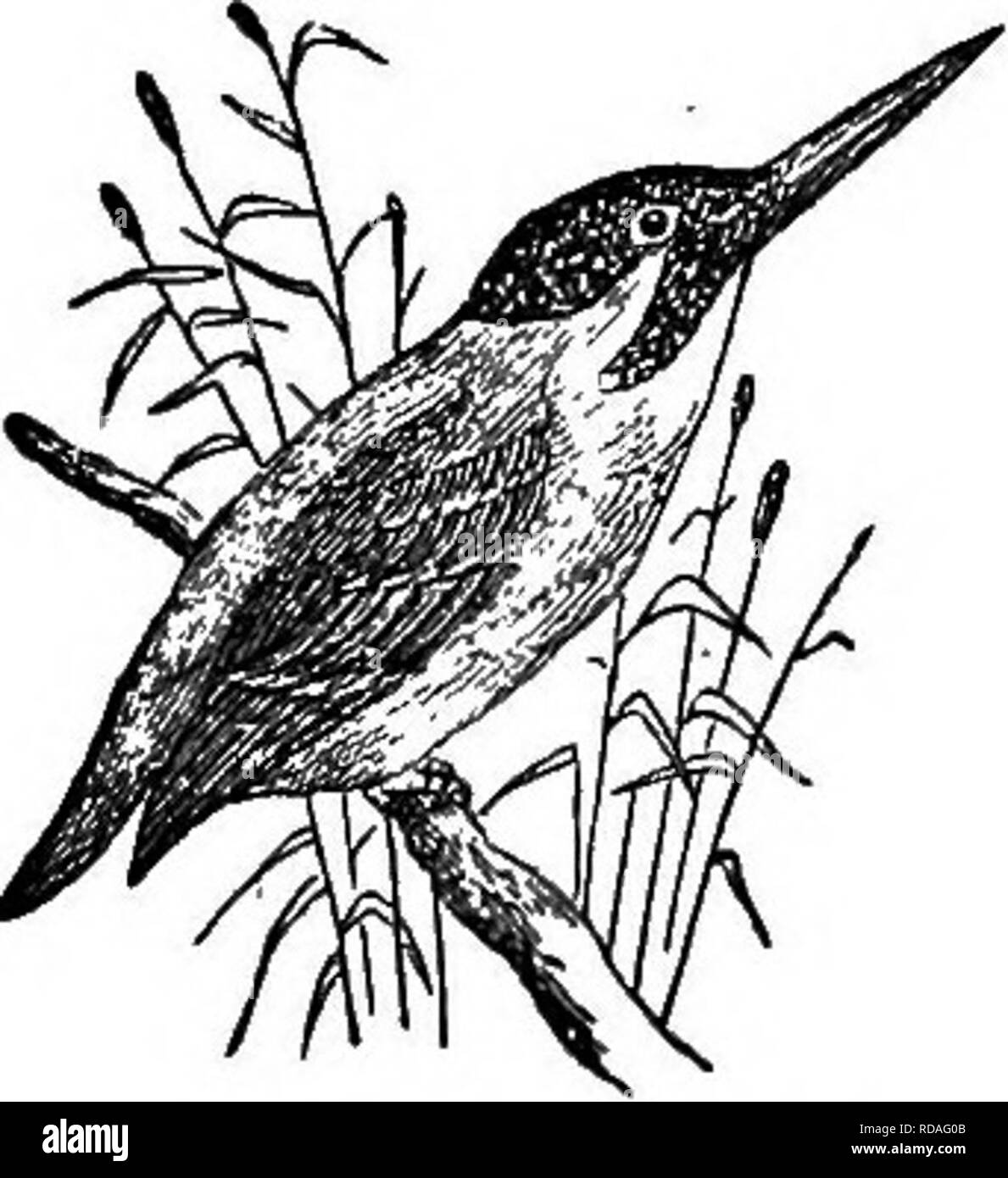Illustrated natural history comprising descriptions of animals birds fishes reptiles insects etc with sketches of their peculiar habits and