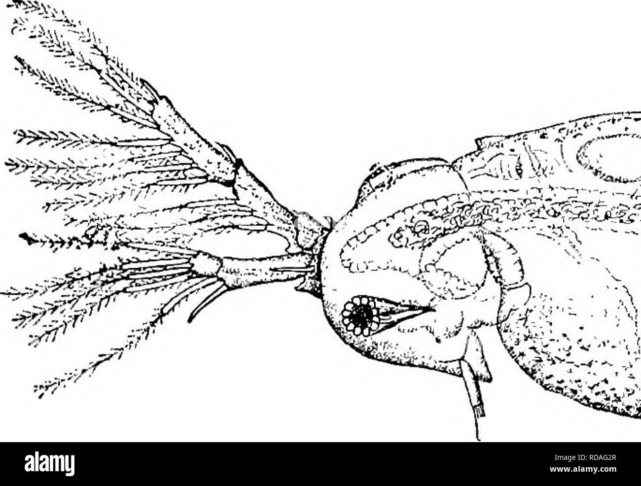 Fresh-water biology  Freshwater biology  THE WATER FLEAS