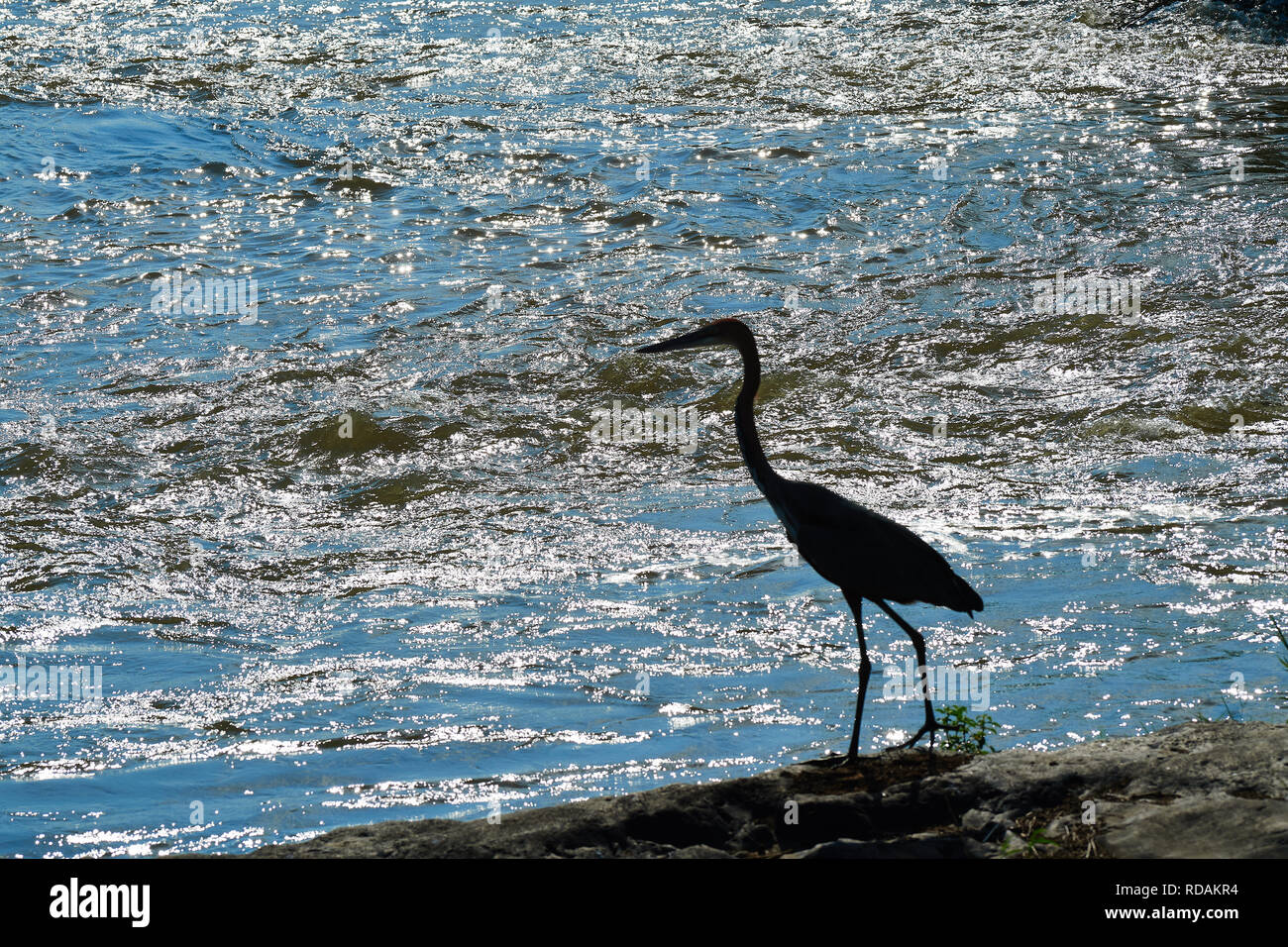 Silhouette of Stork in Kruger Sabie River - Stock Image