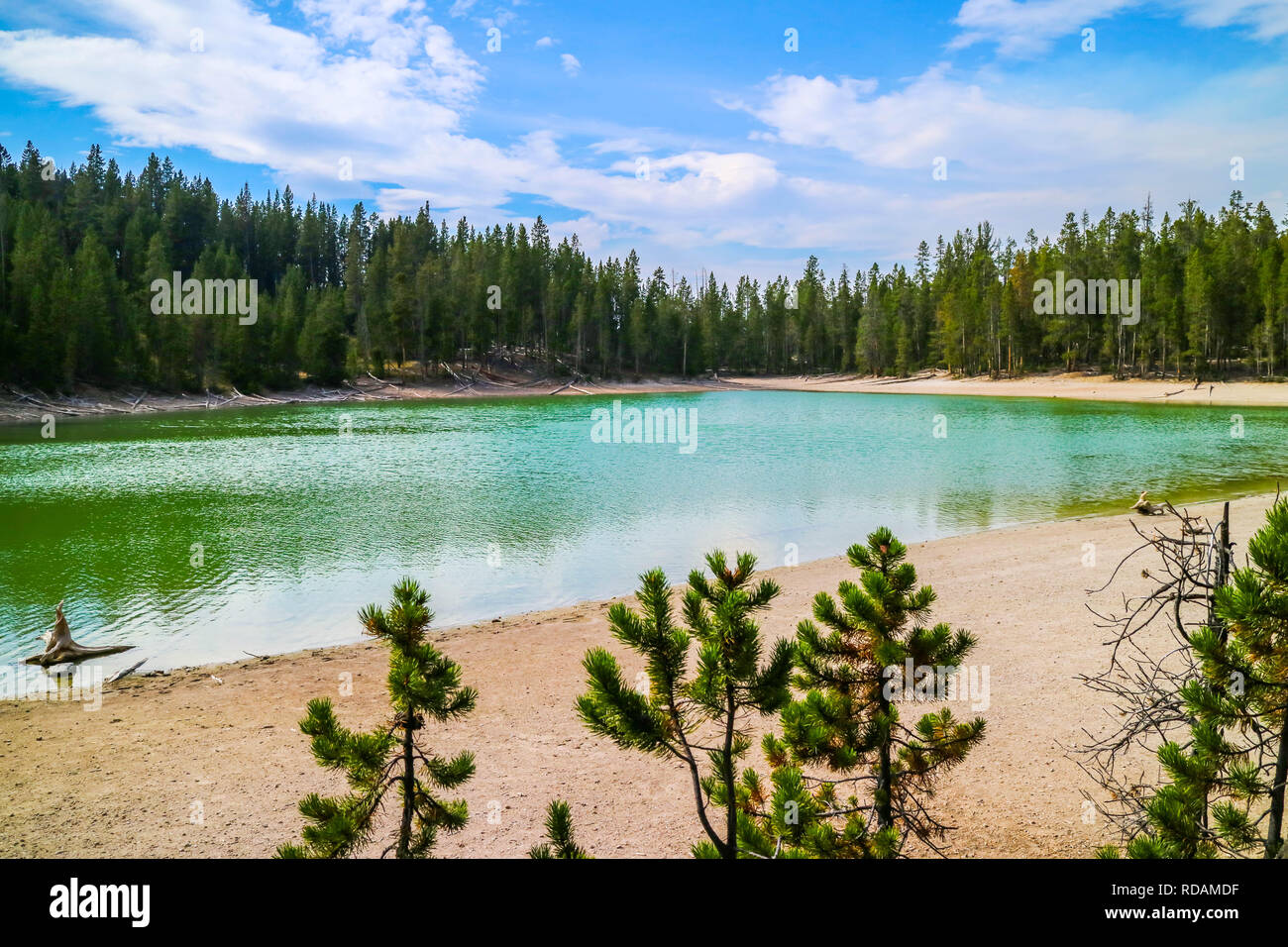 A very small crystal clear lake in the forest of Yellowstone