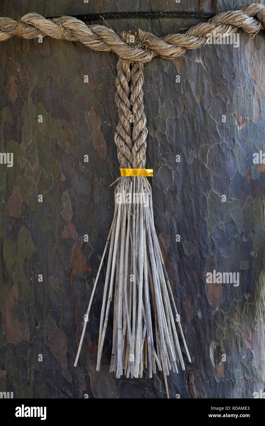 Kumamoto, Japan - November 11, 2018: Sacred Shimenawa or enclosing rope around a tree in Suizenji Garden against evil spirits - Stock Image