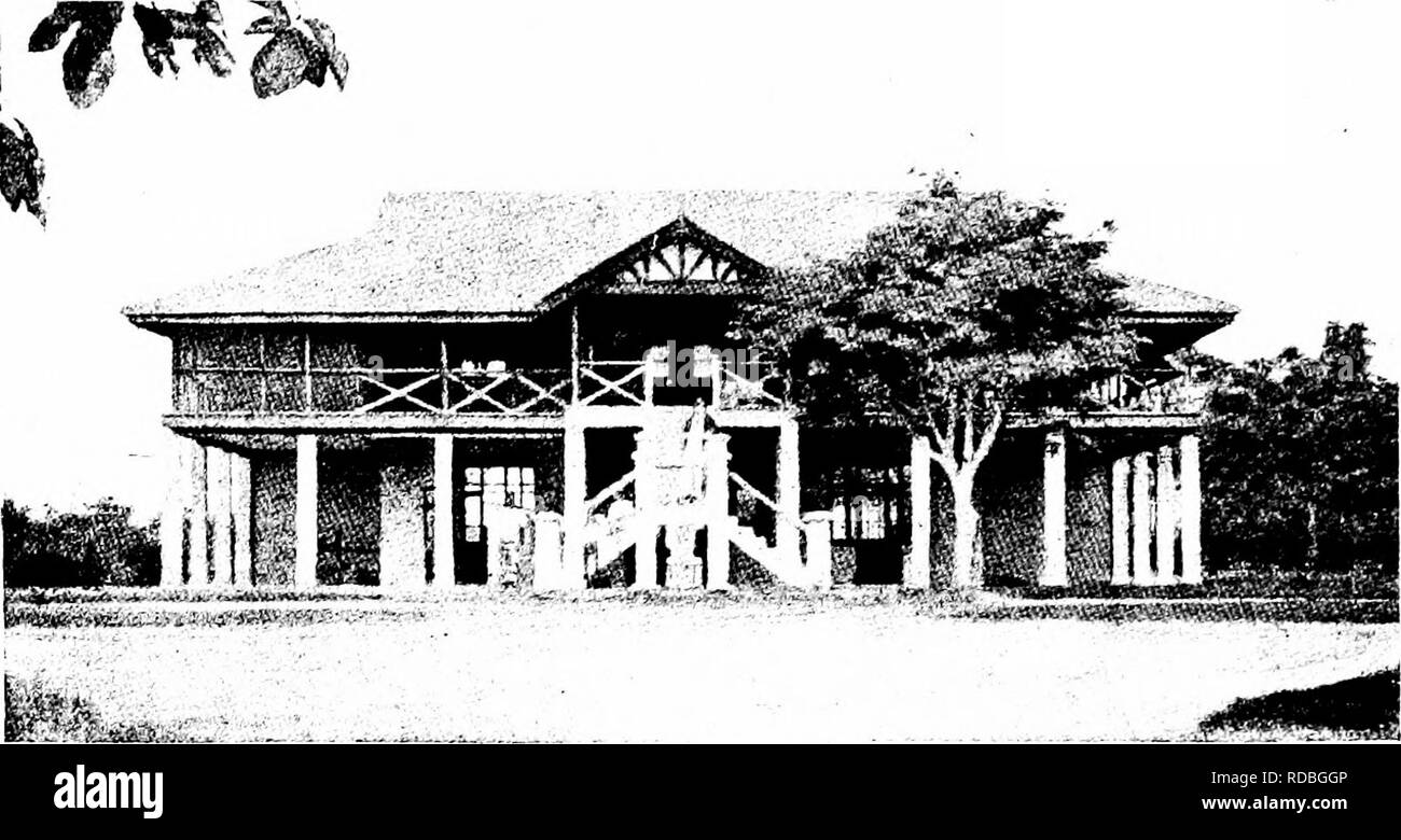 . West African forests and forestry . Forests and forestry. Fig. 29.—The Chief Conservator of Forests' House, with flve-jear-o!d Albizzia Lebbek standing beside it. S»cti > »--/_-. Please note that these images are extracted from scanned page images that may have been digitally enhanced for readability - coloration and appearance of these illustrations may not perfectly resemble the original work.. Unwin, Arthur Harold. London : T. F. Unwin, ltd. - Stock Image