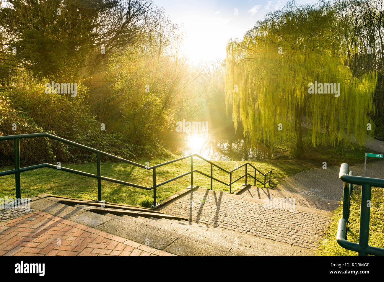 backlight scene in the park - morning hour after sunset - stairs in the park - Stock Image