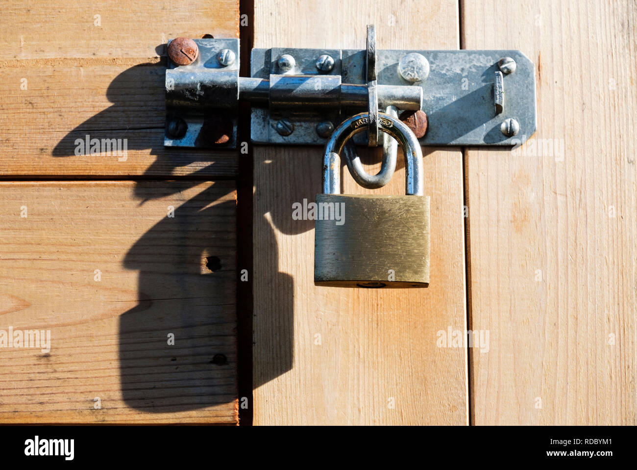 Brass padlock with hardened steel shackle securing a bolt on a wooden shed door locking it for security. UK - Stock Image