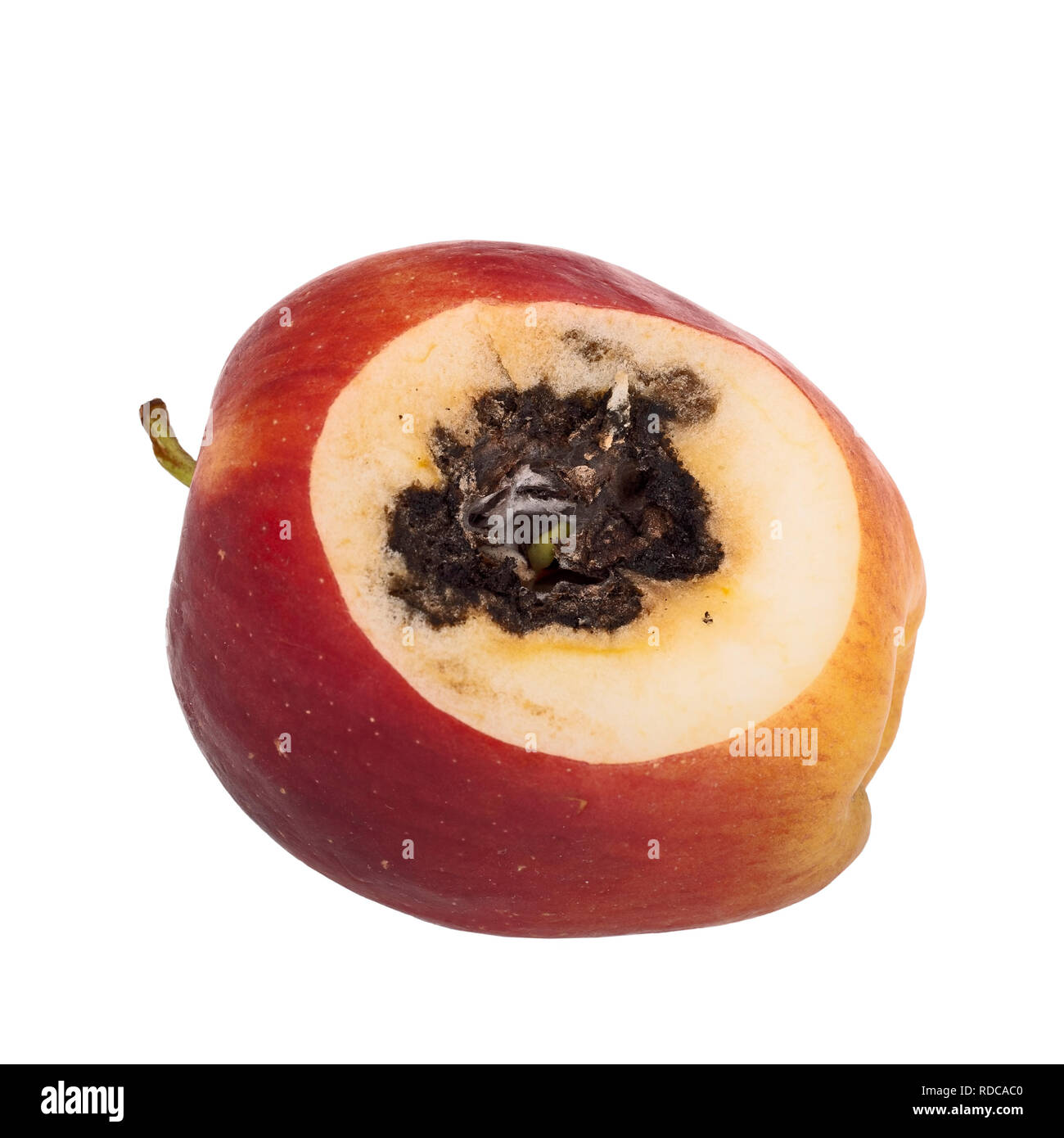 Vivipary in apple. Seeds, pips are already growing in the core when the fruit is cut open. - Stock Image