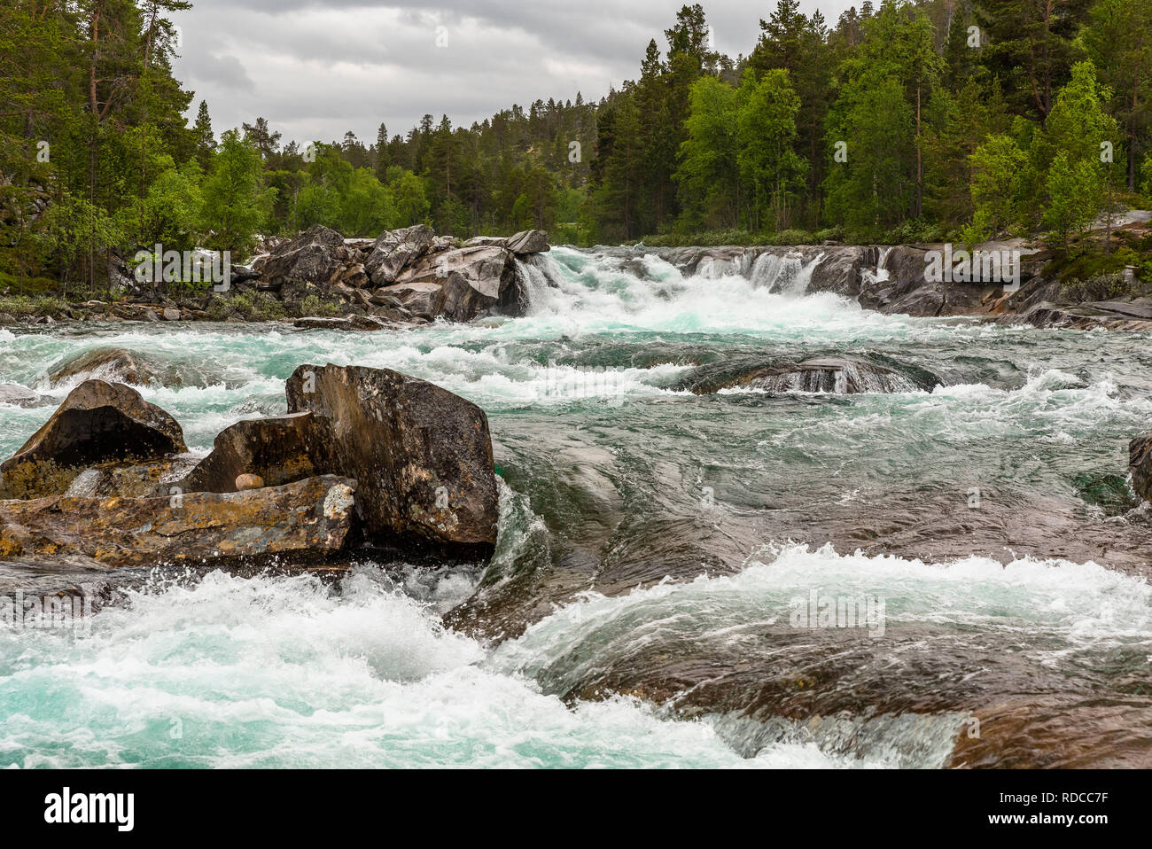 A turbulent river among boulders in a valley overgrown with birches and spruces under a stormy sky. Norway, Saltfjellet. - Stock Image