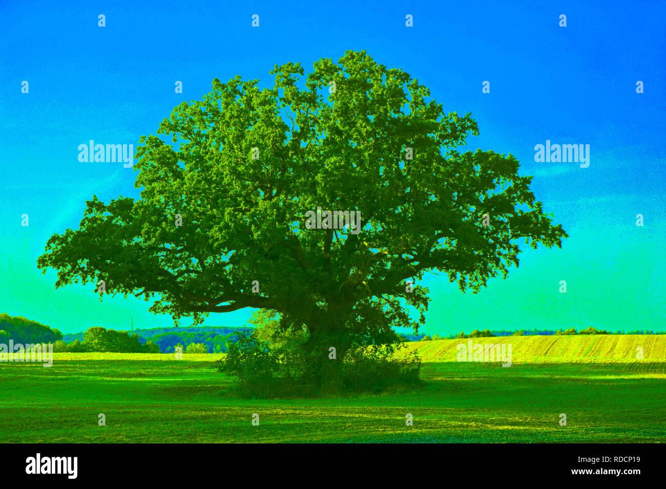Landschaft, Hintergrund, Natur, Baum Stock Photo
