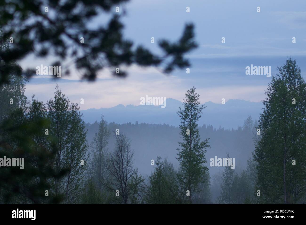 A cloudy forest view in a norwegian woodland. - Stock Image