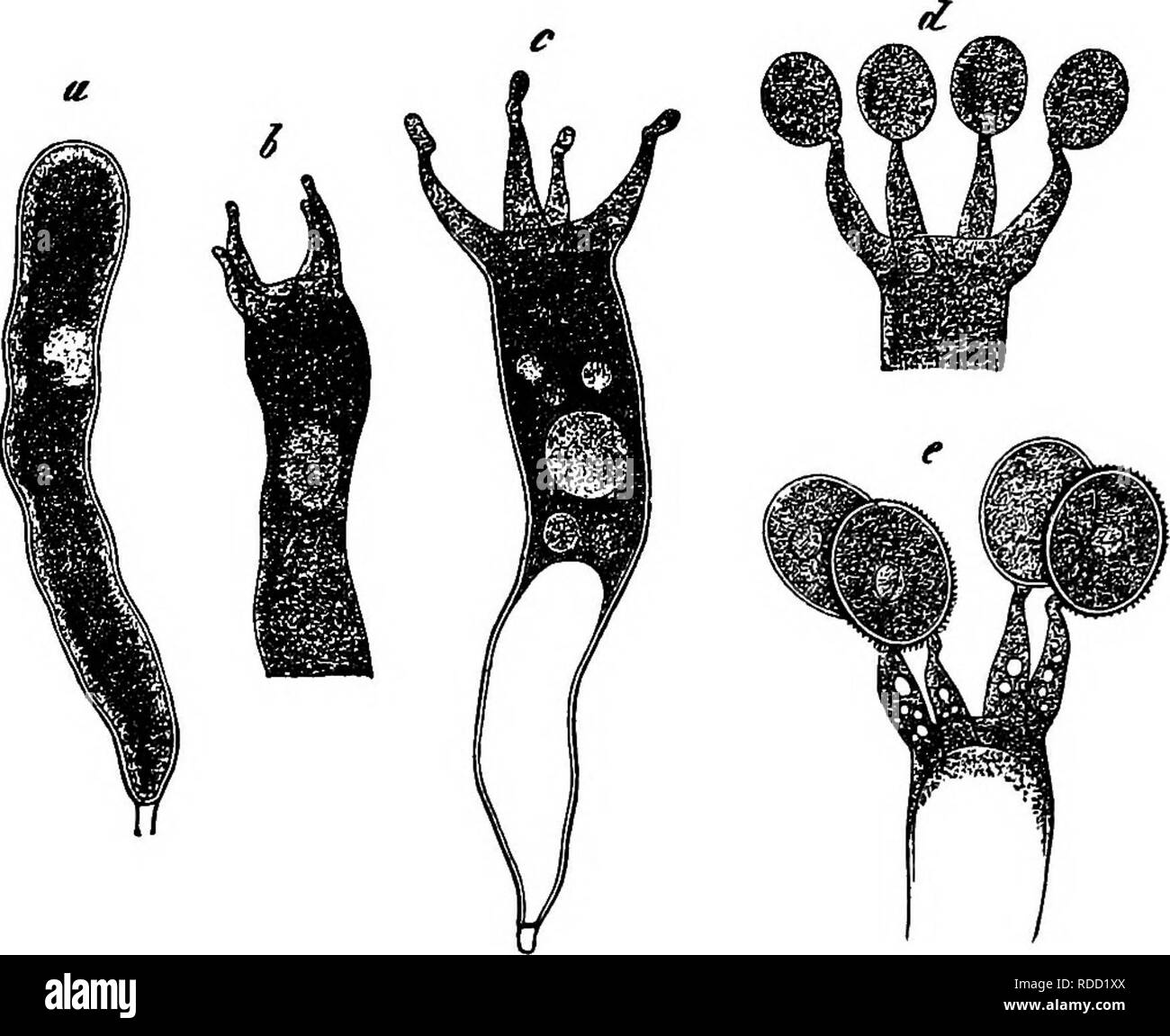 Vacuoles Black and White Stock Photos & Images - Alamy