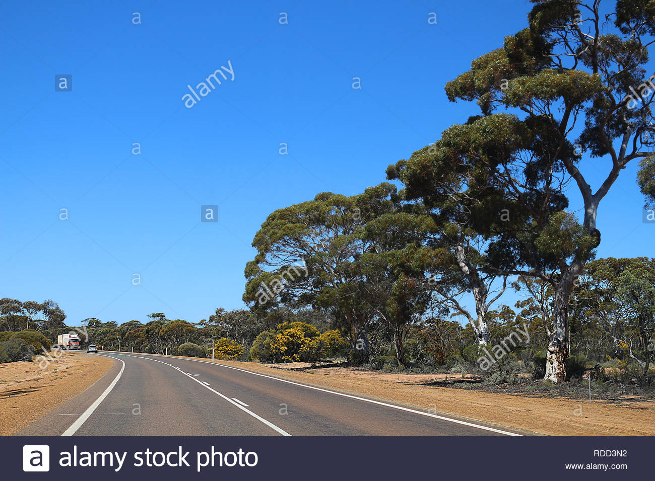Great Eastern Highway with yellow flowering wattle and gum trees at roadside, Western Australia Stock Photo
