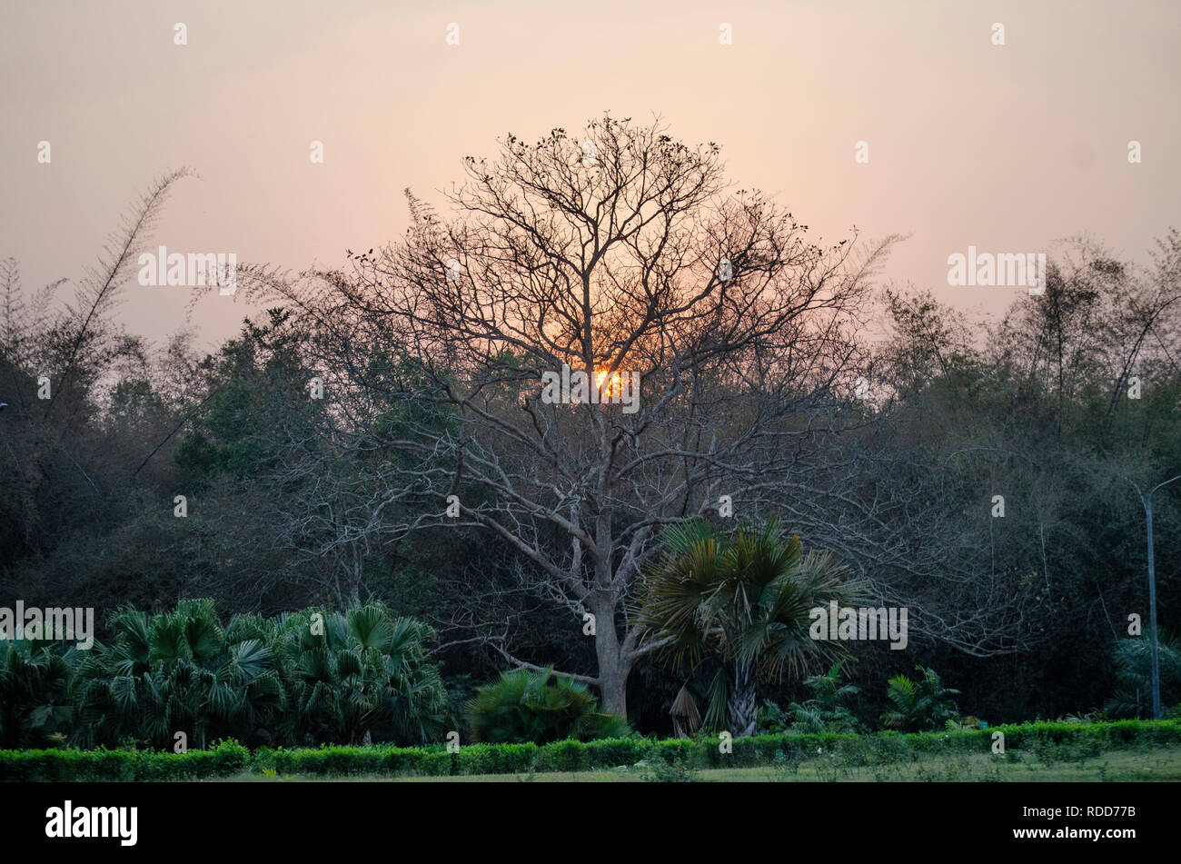 A leafless tree against a sunset. - Stock Image