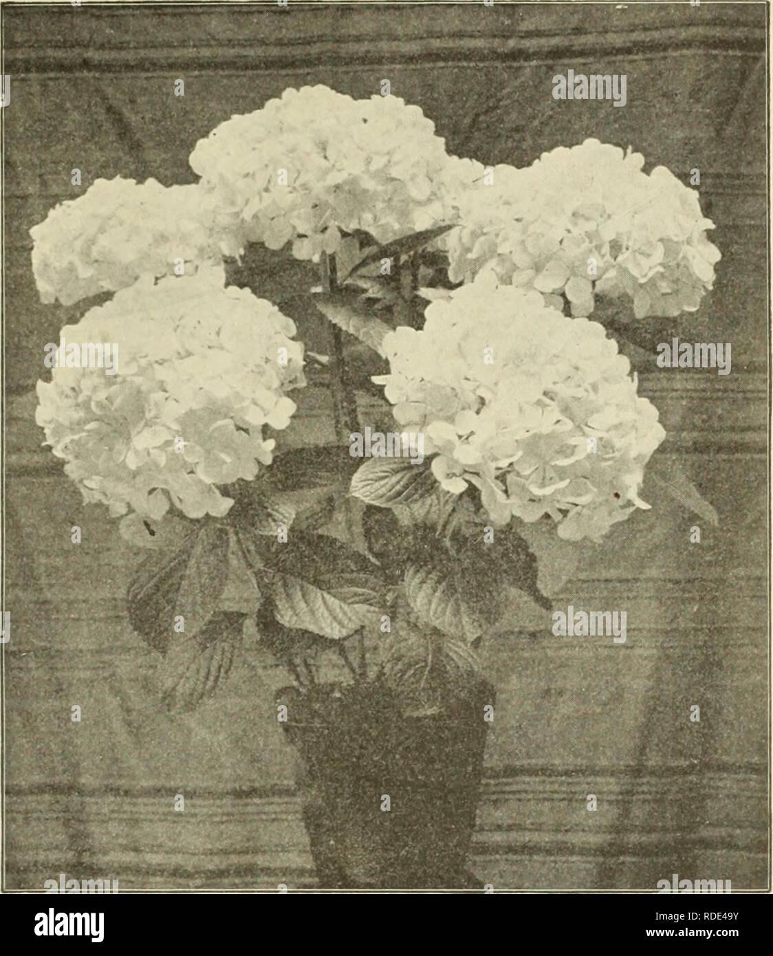 E  G  Hill & Co , wholesale florists  Nurseries (Horticulture