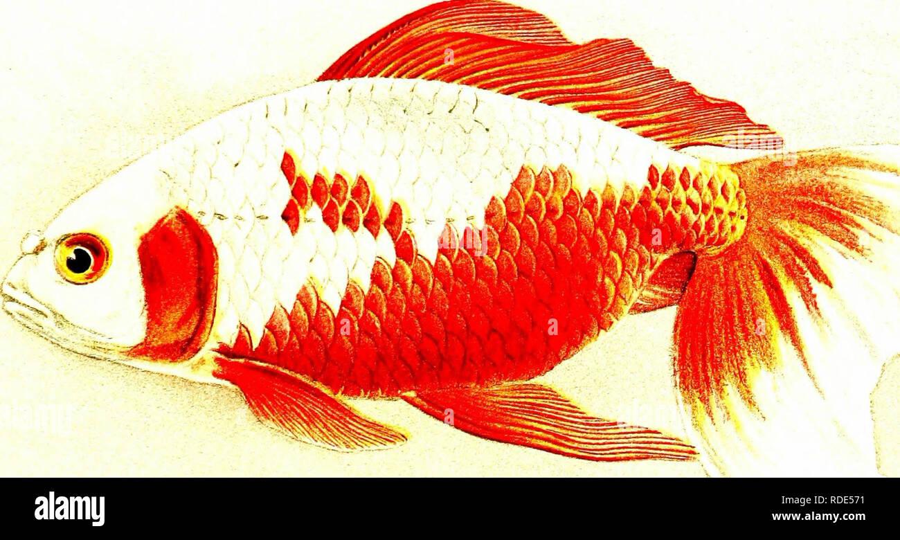 Watonai Stock Photos & Watonai Stock Images - Alamy