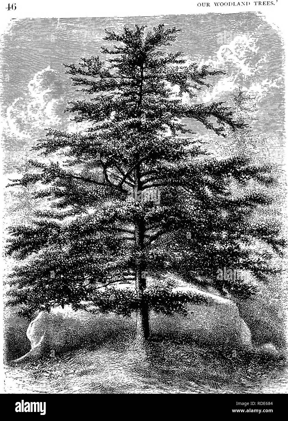 """. Our woodland trees . Trees; Trees. Jlicre is so much of stability and permanence in tlie niialitius wliicll distinguish Tiee= Trom other and more fragile kinds ol  egetation.' [â ^'""""i'""""'? 47-. Please note that these images are extracted from scanned page images that may have been digitally enhanced for readability - coloration and appearance of these illustrations may not perfectly resemble the original work.. Heath, Francis George, 1843-1913. London : Sampson Low, Marston, Searle, & Rivington - Stock Image"""