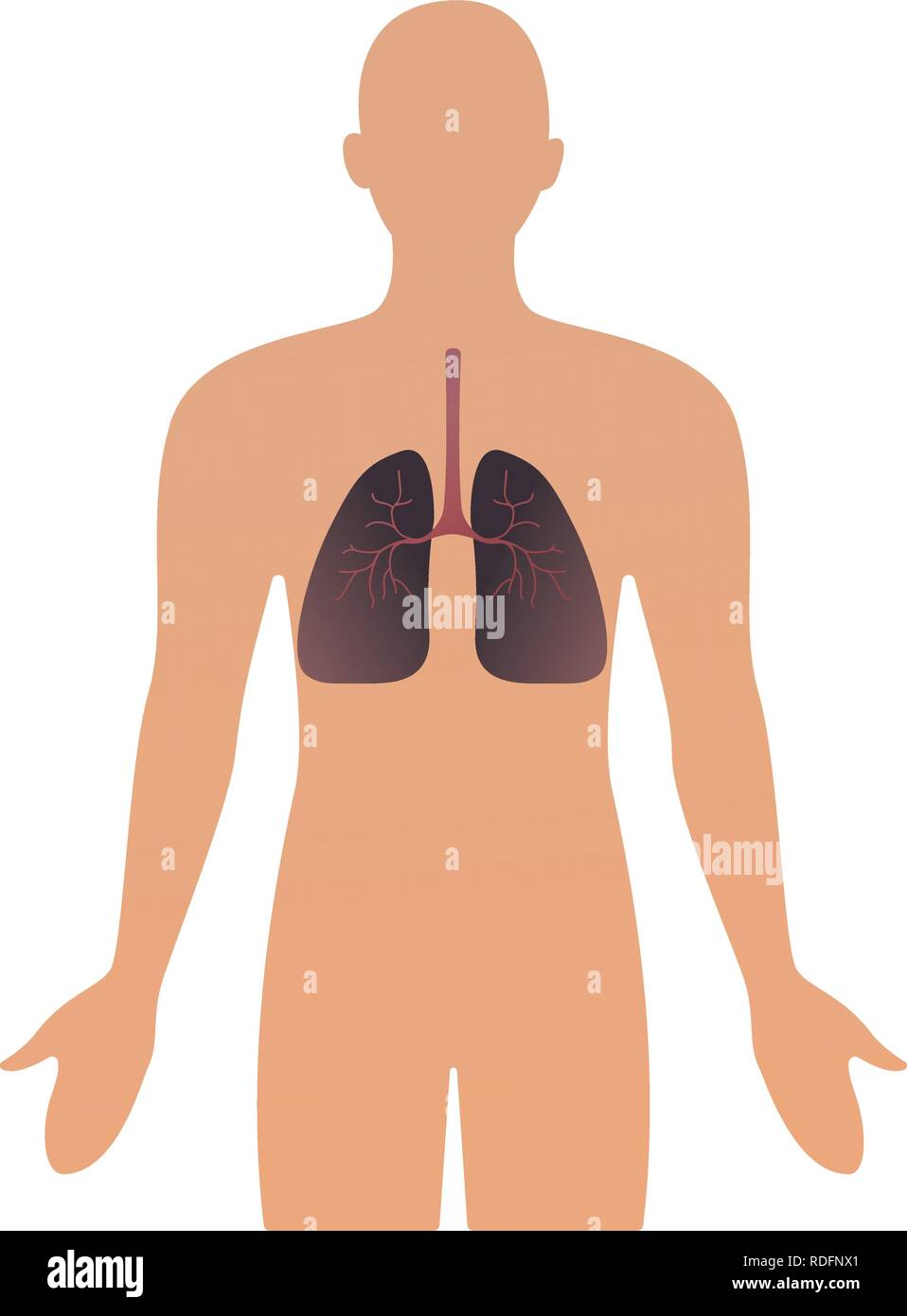 Human organs vector illustration. human anatomical man silhouette with organ. lungs. illustration concept Healthcare. - Stock Image