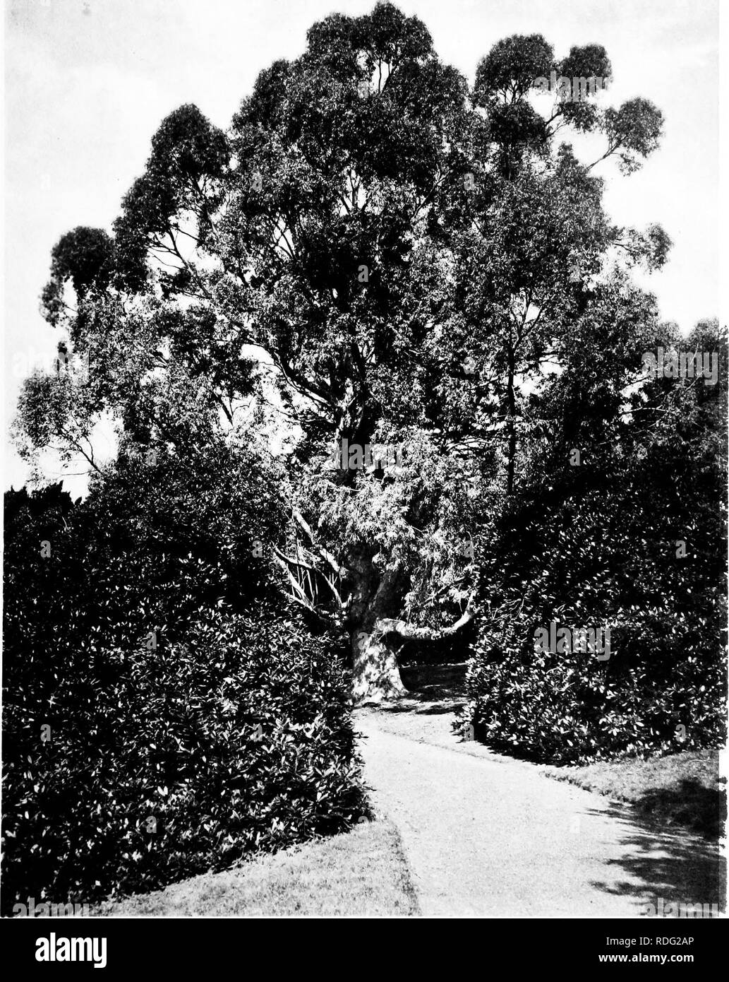4ed928931bb6 The trees of Great Britain  amp  Ireland. Trees  Trees. Plate 361 .